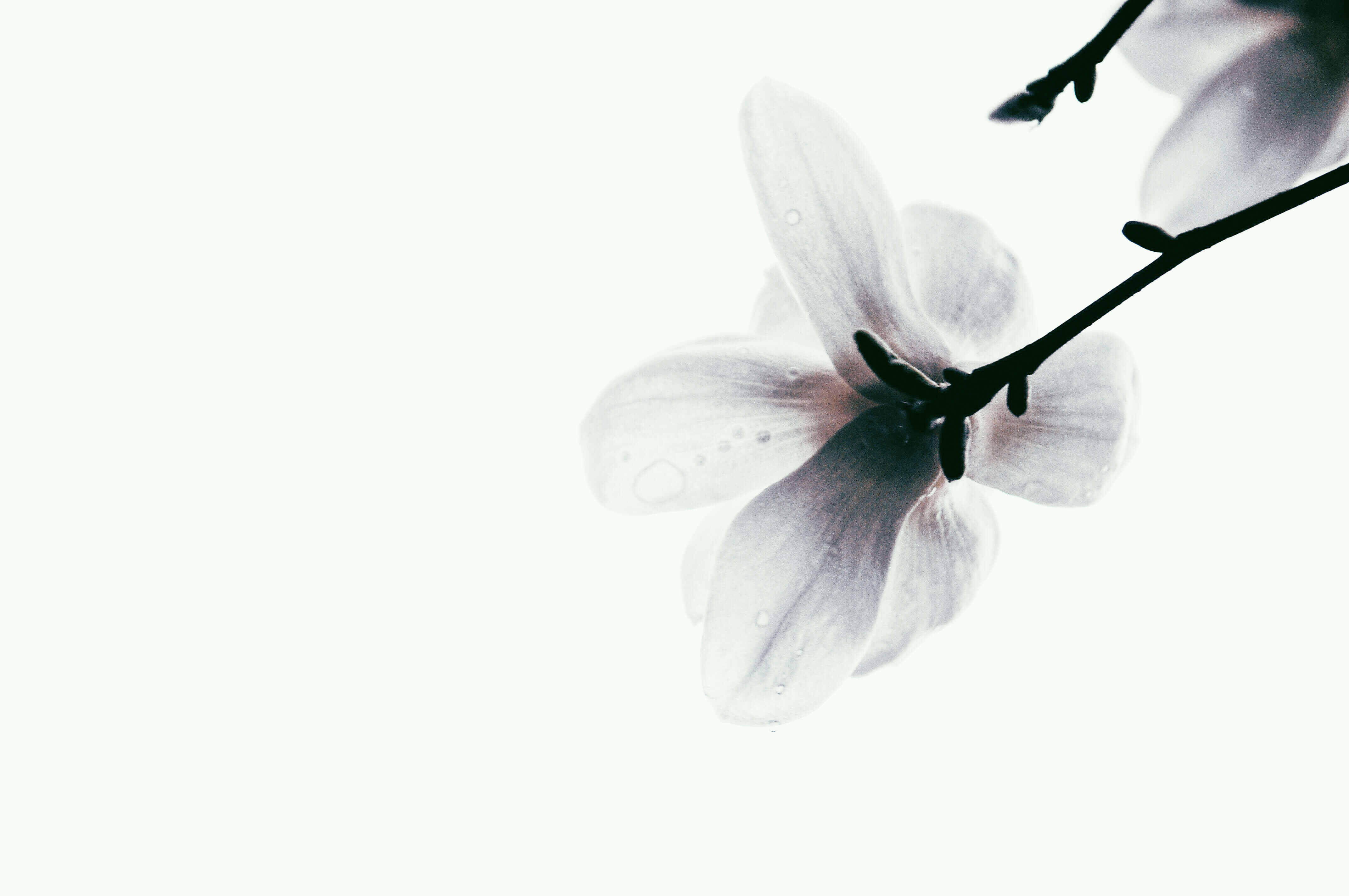orchidee-floral